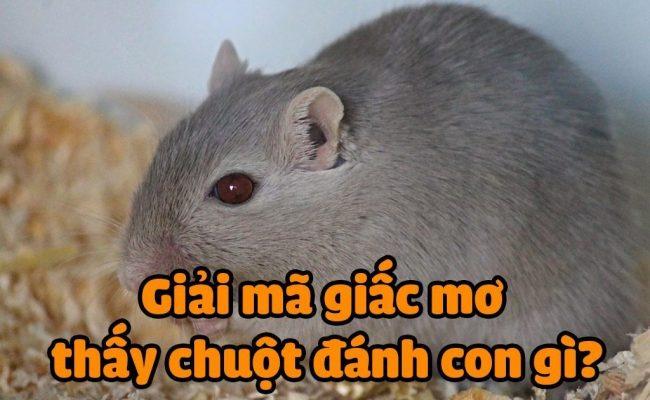 Mơ thấy chuột là điềm báo gì ?