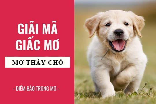 Mơ thấy chó là điềm báo tốt hay xấu - Đánh con gì ?