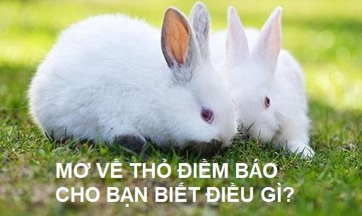 Nằm mơ thấy thỏ là điềm báo tốt hay xấu - Đánh con gì ?