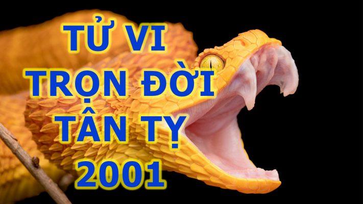 tu-vi-tron-doi-tan-ty-2001